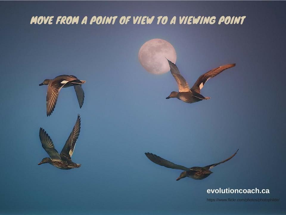 Change a perspective, change your life. You can see the sky and the moon behind. There are 4 birds in flight and the caption